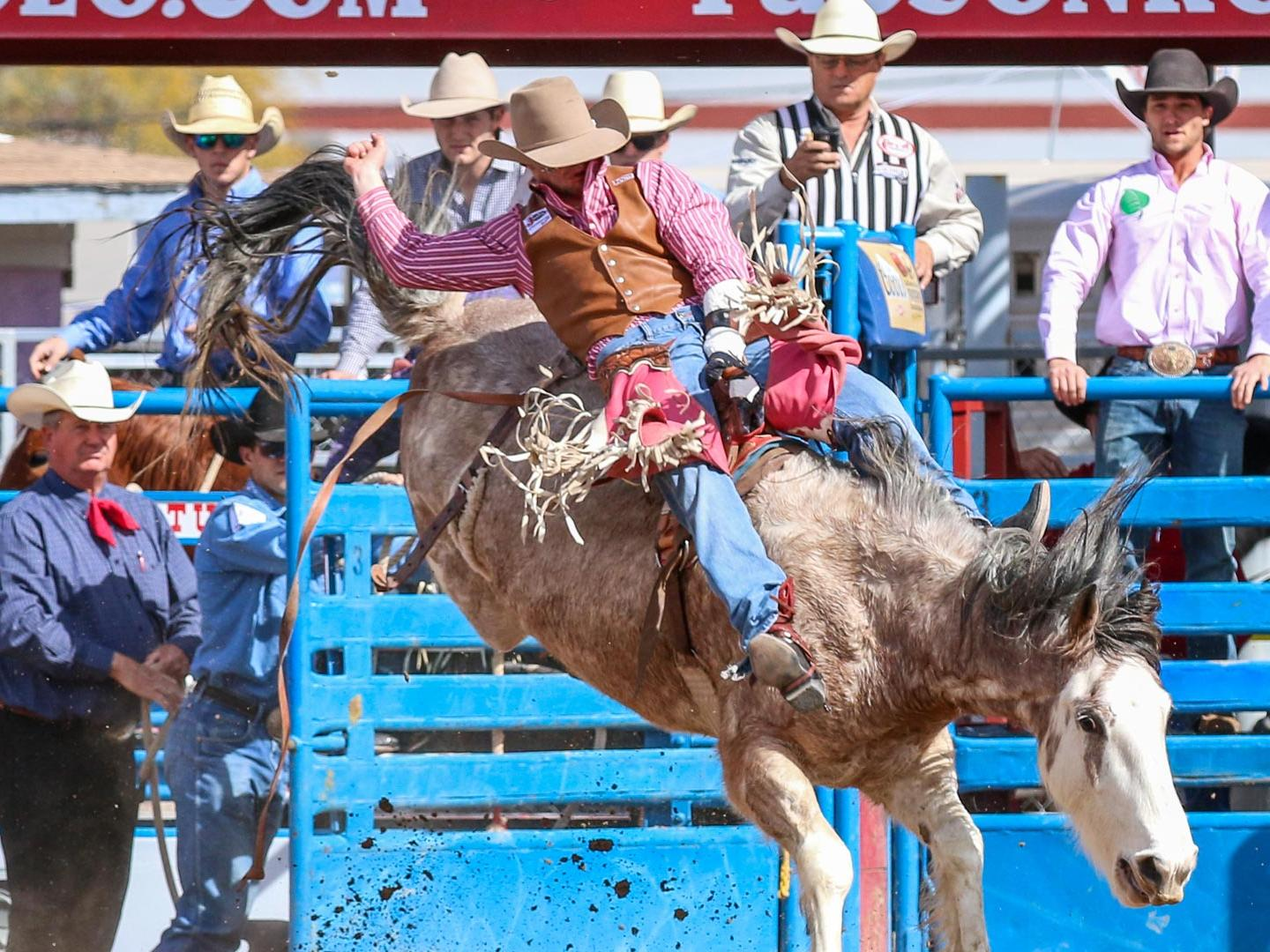 Bareback Rider Hero at Tucson Rodeo